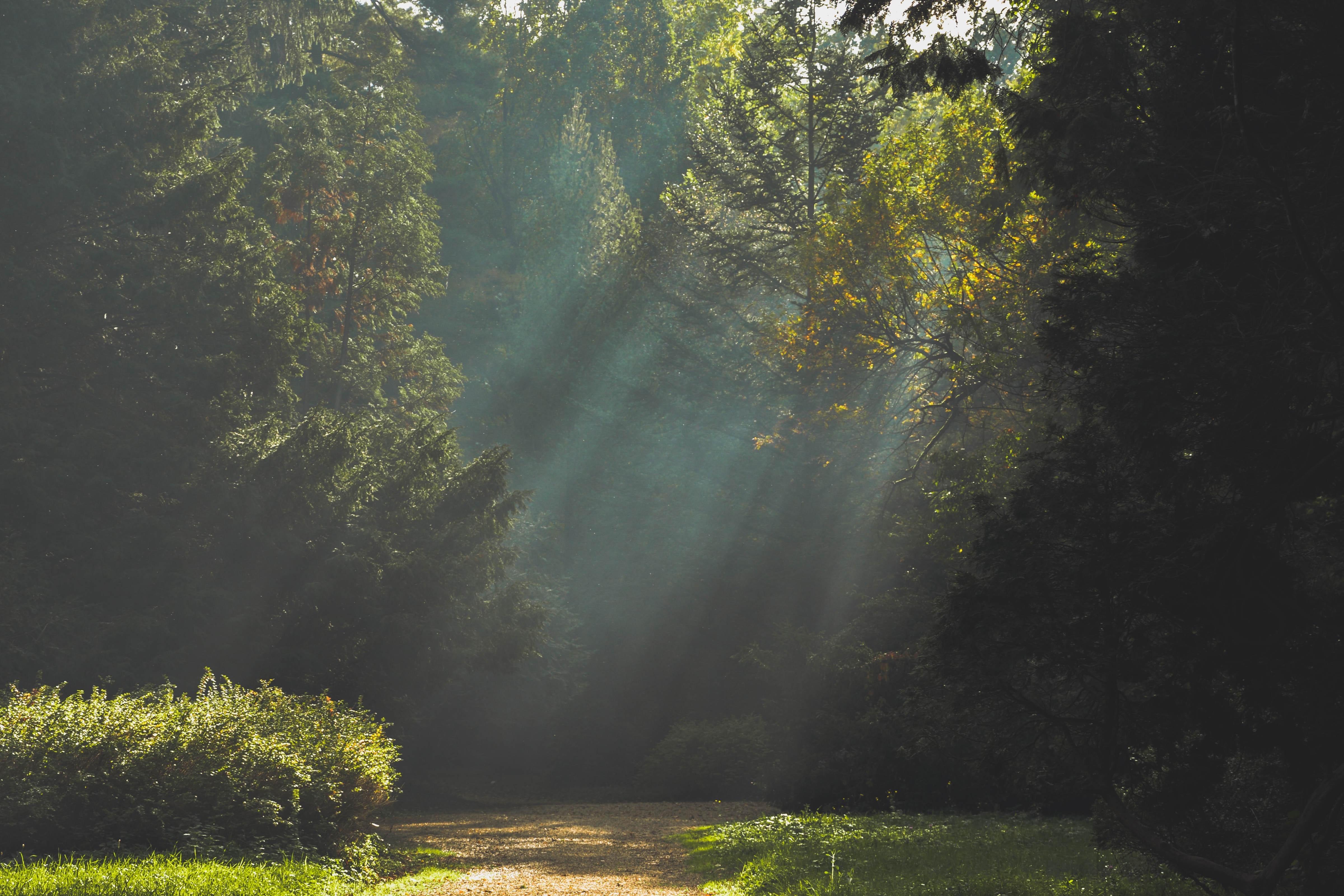 autumn-forest-landscape-21008 (1)