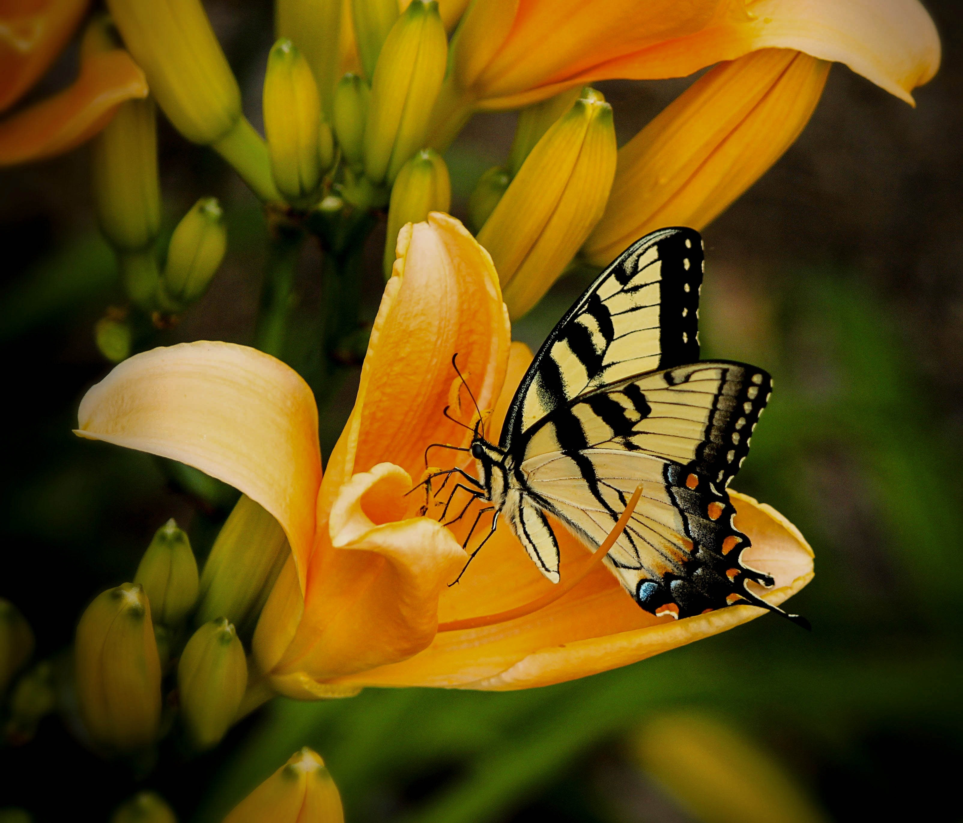 bloom-butterfly-close-up-67811